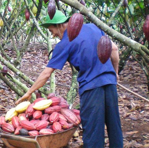 ca-cao-vietnamfarmer.vn-5