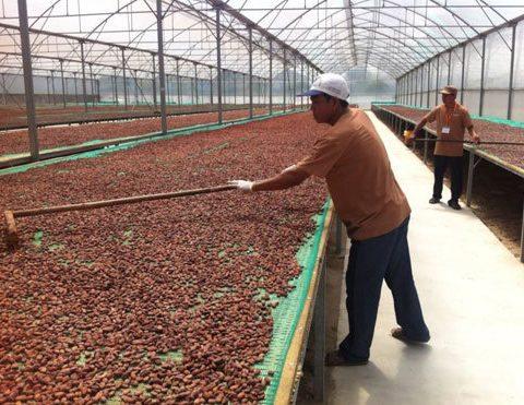 ca-cao-vietnamfarmer.vn-9