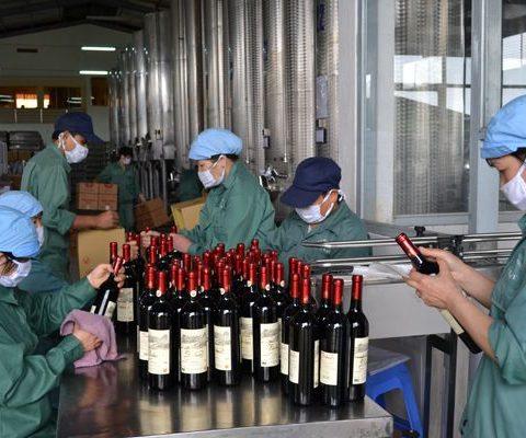 vang-da-lat-vietnamfarmer.vn-3